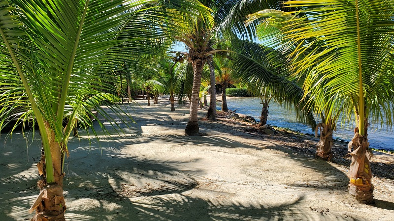 Coral-Views-Beach-with-coconut-trees-for-shade